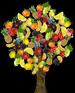 fruit-1929879_1920.png