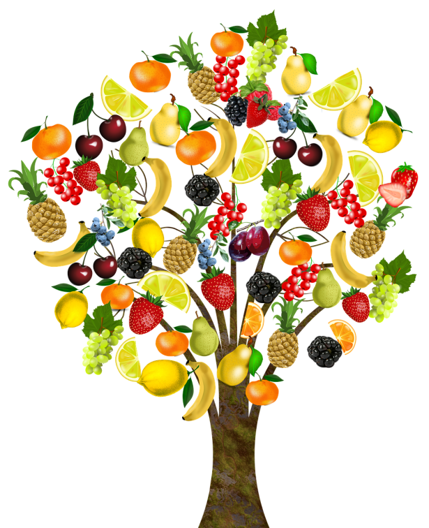 fruit-1929879_1920.png